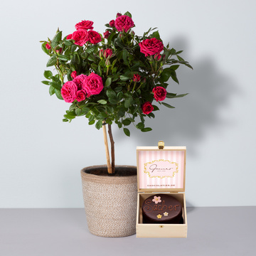 Rosenstämmchen in Pink mit Korb mit Mini Sachertorte Blumen