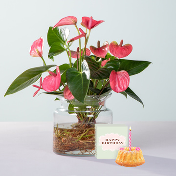 Water Plant Anthurie in Rosa mit Glasvase mit Sommer Geburtstagsküchlein mit Kerze