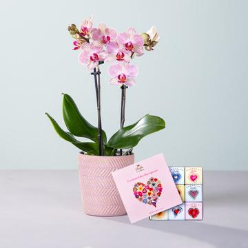 Orchidee Nepal mit Keramik-Übertopf mit 9 gemischten Mini Schokoladentafeln