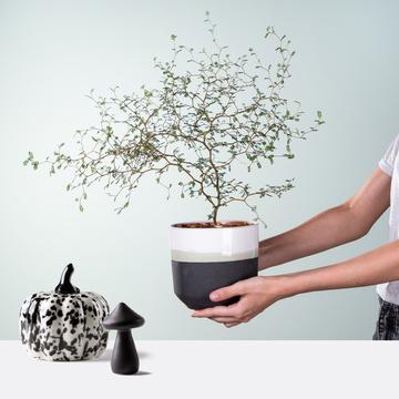 Zarte Schönheit mit Kürbis und Pilzen aus Keramik