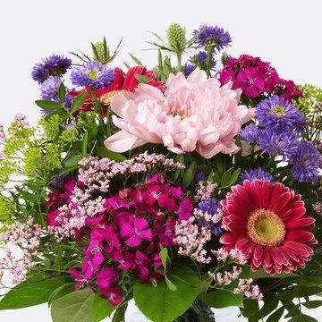 50 Stück bunte Chrysanthemensamen Chrysant Chrysantheme Garden Plants X2Q9 Y6W6