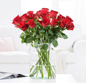20 Rosen Rhodos in Rot