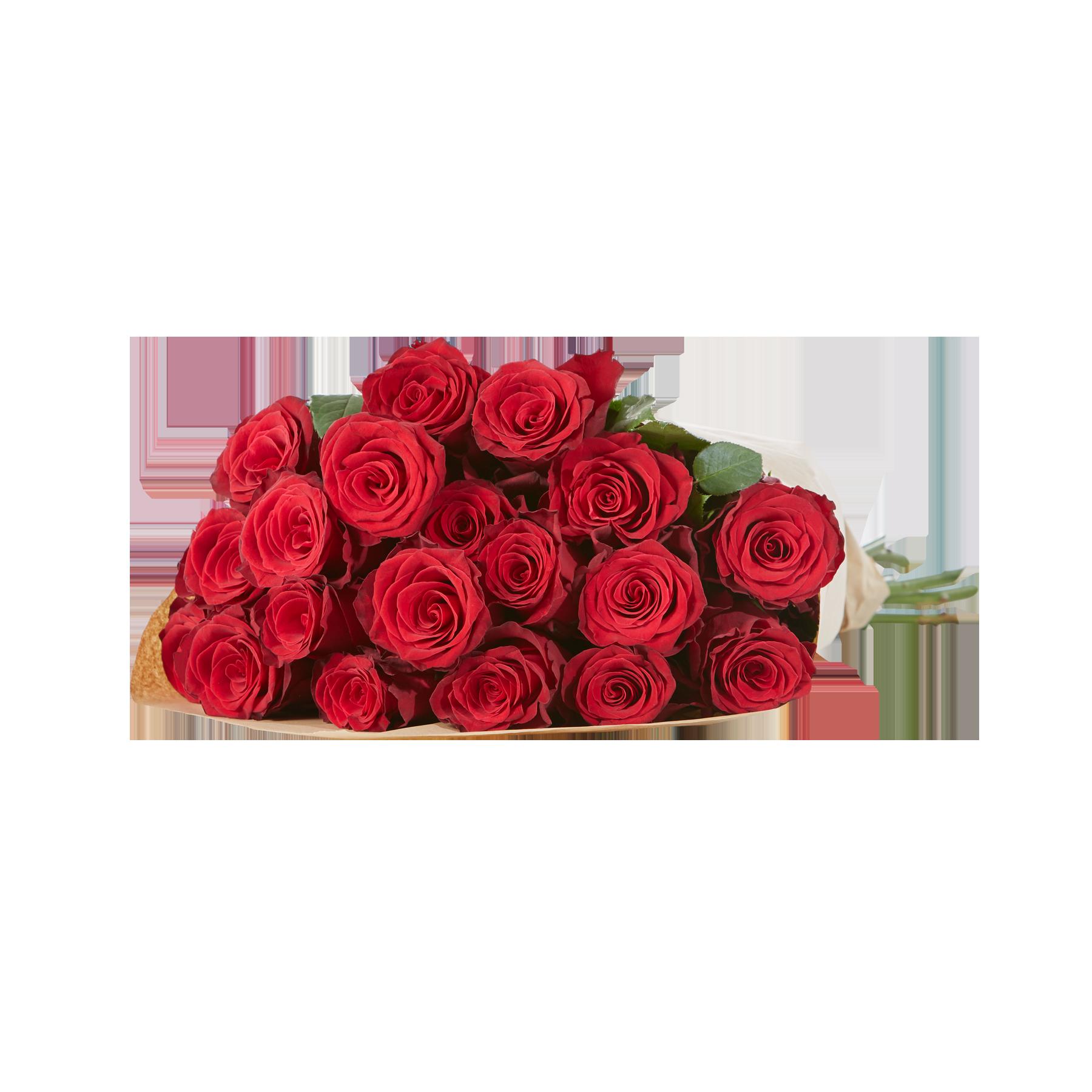 #20 Rosen Rhodos#