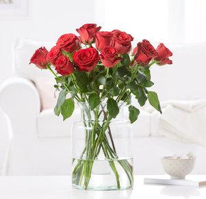 15 Rosen Rhodos in Rot