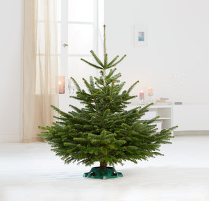 Weihnachtsbaum TimTanne ohne Schmuck Größe M in Grün