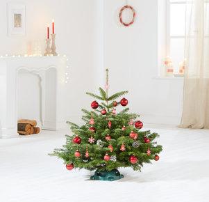 Weihnachtsbaum Rote TimTanne Größe S in Weiss, Rot, Grün und Braun