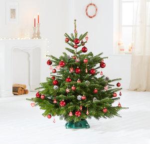 Weihnachtsbaum Rote TimTanne Größe M in Weiss, Rot, Grün und Braun