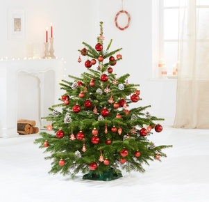 Weihnachtsbaum Rote TimTanne Größe L in Weiss, Rot, Grün und Braun