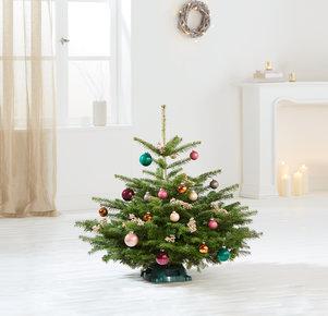 Weihnachtsbaum Bunte TimTanne Größe S in Rosa, Pink, Creme, Gold, Kupfer und Grün