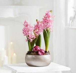 Pflanze Shiny Elegance in Rosa, Pink, Silber und Grün