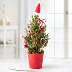 Zuckerhutfichte Loved by Santa mit Schmuck-Set und Übertopf