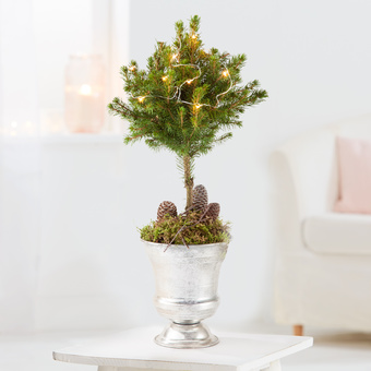 Picea Stämmchen mit LED-Lichterkette im Metall-Pokal