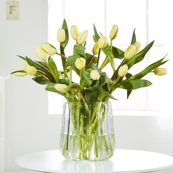 Tulpen in Gelb 20 Stiele in Gelb und Creme