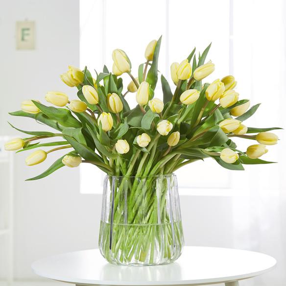 Tulpen in Gelb 40 Stiele in Gelb und Creme