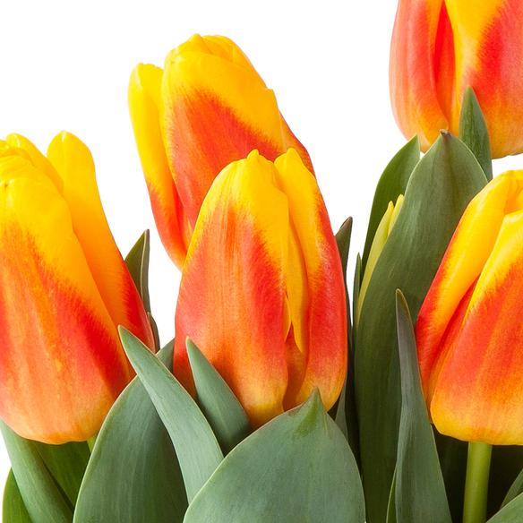 Tulpe in Orange im Keramik-Übertopf