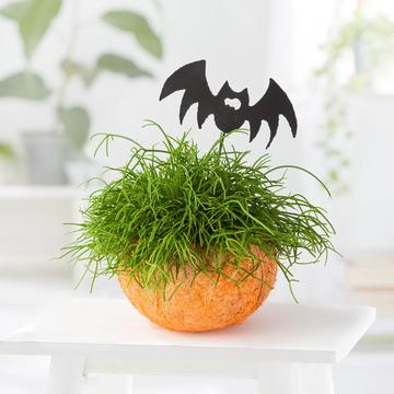 Halloween Sukkulente in Kokosschale mit Fledermaus-Stecker