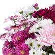Lieblicher Chrysanthemen-Mix