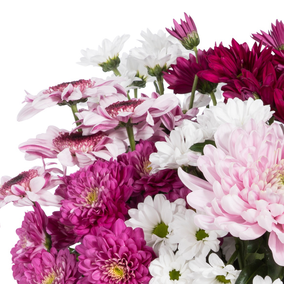 Lieblicher Chrysanthemen-Mix