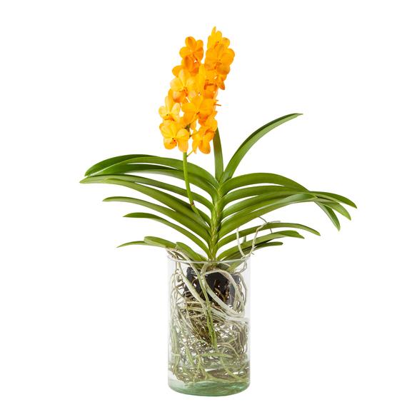 Vanda Orchidee Gelb in Glasvase