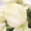 Rosenstrauß  Weiße Rosen 20 Stiele