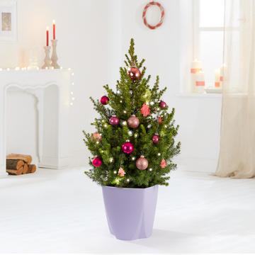 Weihnachtsbaum XXL Christmas Memories