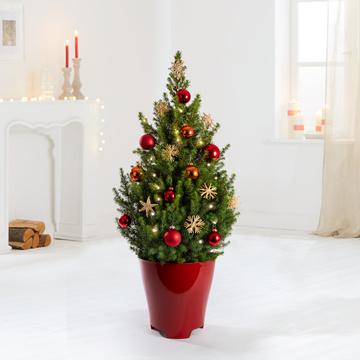 Weihnachtsbaum XXL Weihnachtsabend