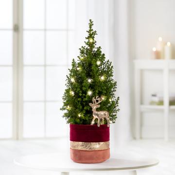 Weihnachtsbaum mit Hirschstecker im Übertopf