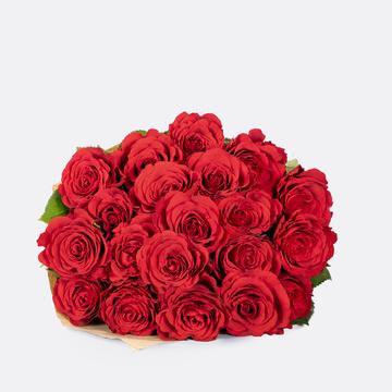 Rosen in Rot 25 Stiele