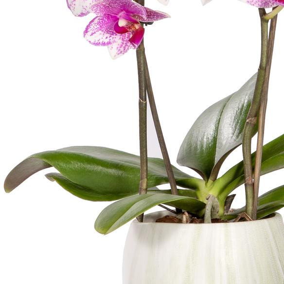 Orchidee in Rosa im Keramik-Übertopf