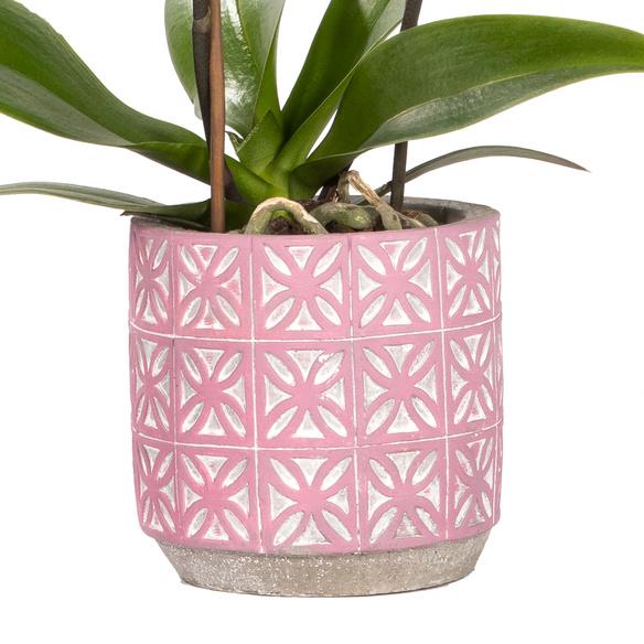 Orchidee in Pink im Keramik-Übertopf