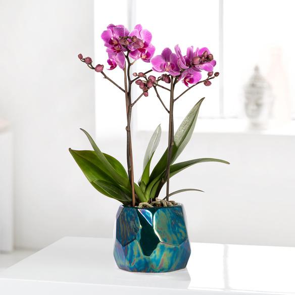 https://static.blume2000.de/pictures/20002135/022_Orchidee-in-Violett-im-Design-Uebertopf.jpg