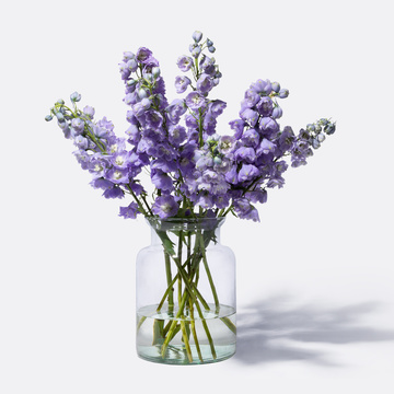 Rittersporn in Violett 10 Stiele