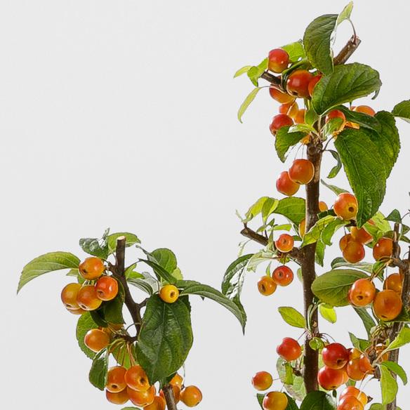 Apfelzweige in Orange 3 Stiele