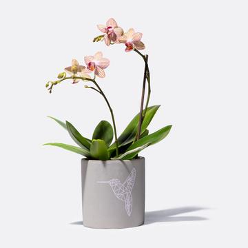 Orchidee mit Motiv-Übertopf