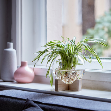 Wasserlilie Water Plant mit Glasvase