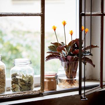Calathea Crocata Water Plant mit Glasvase