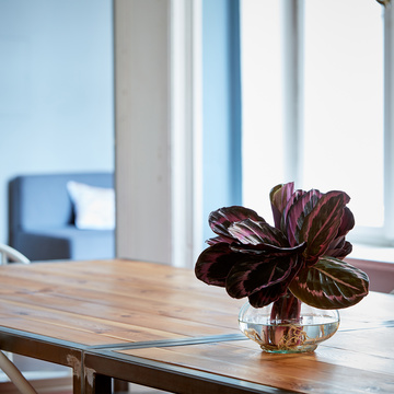 Calathea Roseopicta Water Plant mit Glasvase