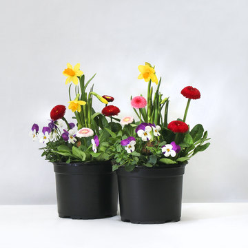 Bunter Pflanzenmix