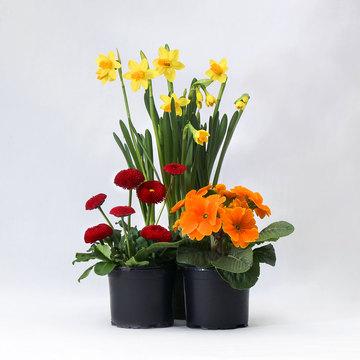 Frühlingspflanzen im Mix