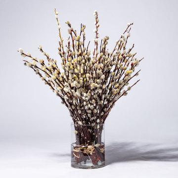 Weidenkätzchen 80 Zweige
