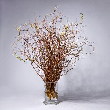 Weide 70 Zweige