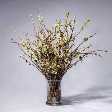 Kirschblüten 80 Zweige
