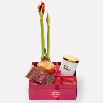 Geschenkset mit Amaryllis, Spekulatius Schokolade & Duftkerze