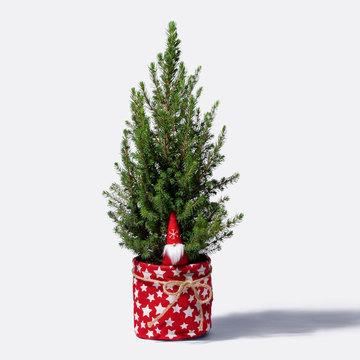 Sternzauber Picea mit Stecker mit Korb