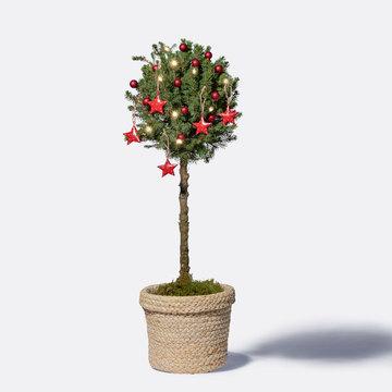 Winterzauber Picea Stämmchen mit Korb