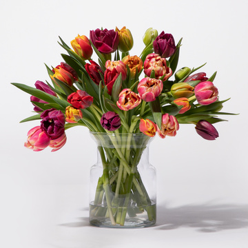 Tulpen Flower Bomb 30 Stiele