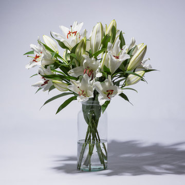 Lilien in Weiß 10 Stiele