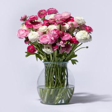 Ranunkeln Mix in Rosa 40 Stiele