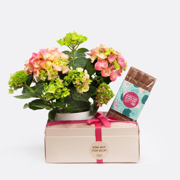 Geschenkset mit Hortensie mit Übertopf und Schokolade