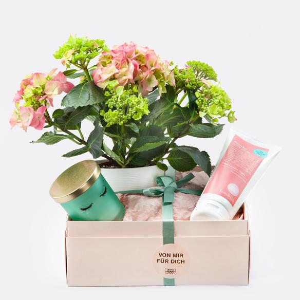 Geschenkset mit Hortensie mit Übertopf, Kerzentopf und Duschgel